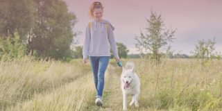 Woman walking white husky in the fields to help prevent burnout